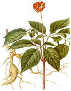 Ginseng at oilsncures.com
